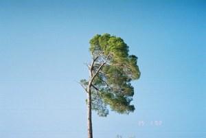 Nature's Art01
